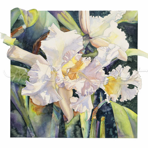 Orchid - Jeweled Lady (Cattleya Orchid) - Watercolor