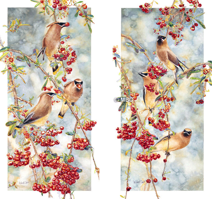 Cedar Waxwings on Pyracantha the Pair