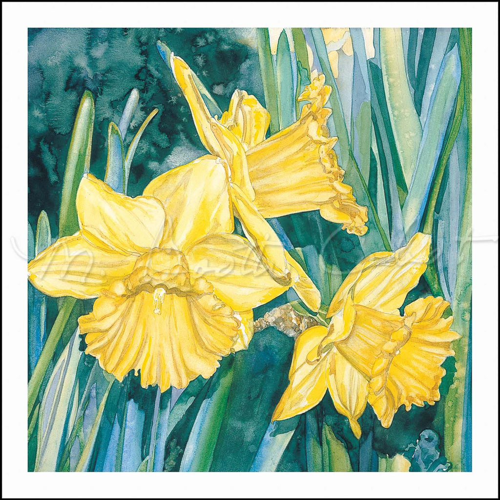 Daffodil Trio - Watercolor
