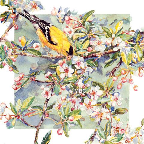Bird - Goldfinch on Crabapple Blossoms II - Watercolor