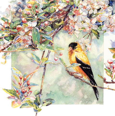 Bird - Goldfinch on Crabapple Blossoms I - Watercolor