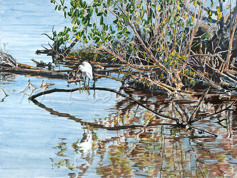 Heron in Mangrove Swamp - Watercolor