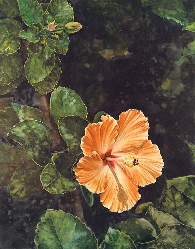 Hibiscus - Watercolor