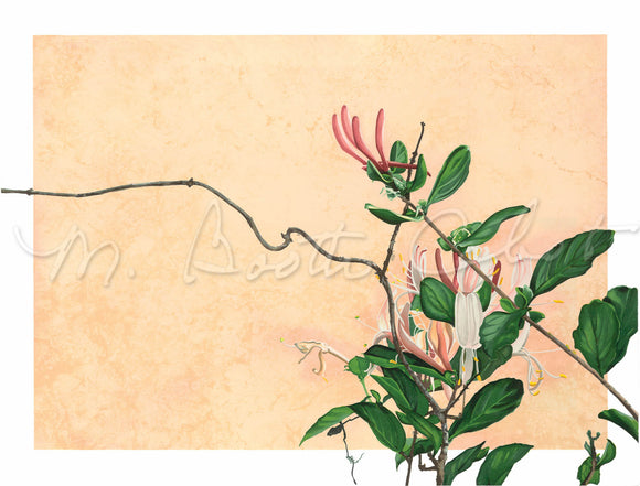 Honeysuckle Vine - Stone Lithograph and Giclee Prints