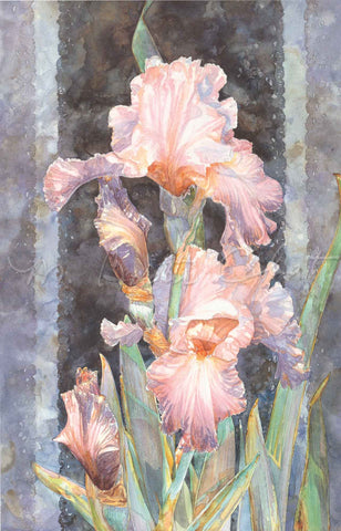 Iris - Irish Lace II - German Bearded Iris - Watercolor