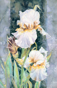Iris - Irish Lace I - German Bearded Iris - Watercolor
