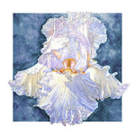 Iris - Laced Cotton Bearded Iris