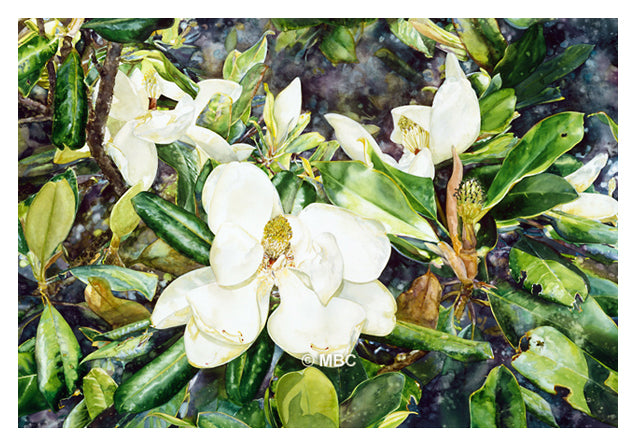 Magnolia Grandiflora - Watercolor