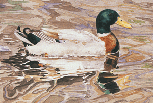 Mallard Duck - Colored Pencil & Watercolor