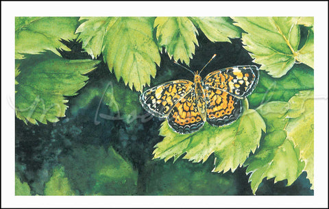 "Butterfly - Pearl Crescent Butterfly - ""Muse"" - Watercolor"