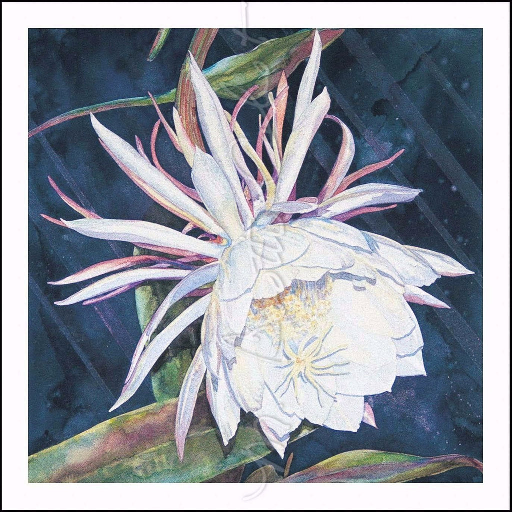 Night Blooming Cereus- Watercolor