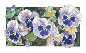"Pansies - ""Blue and White Pansies"" - Watercolor"