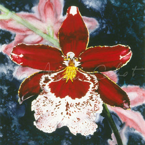 Orchid - Red Miltona Orchid - Watercolor