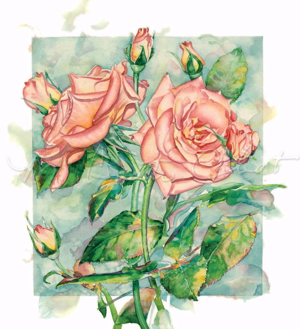 Rose - Rose Duet - Watercolor