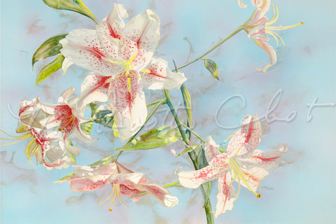 "Lily - Rubrum Lilies - A ""Star Gazer"" Lily - Watercolor"