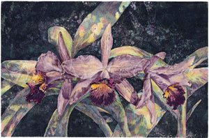 Orchid - Southern Cross  (Cattleya orchid) - Giclee of Etching & Colored Pencil