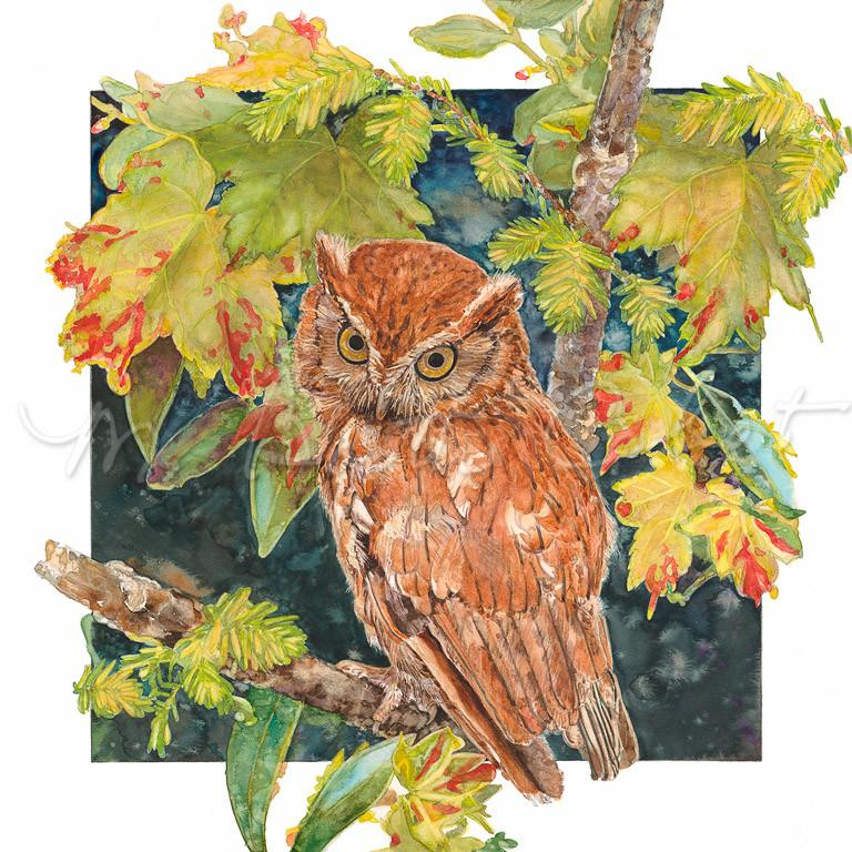 Bird - Southern Screech Owl (Strigidae megascops asio) - Watercolor