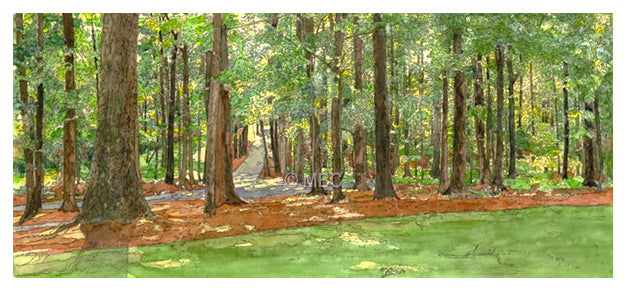 Woodland Peace - Watercolor