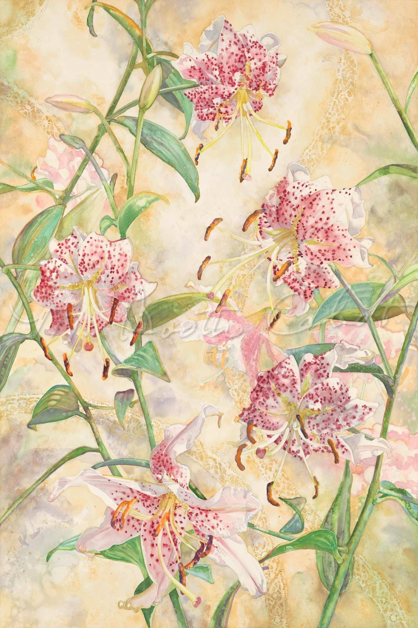 Lily - Stargazer Lilies and Lace - Watercolor
