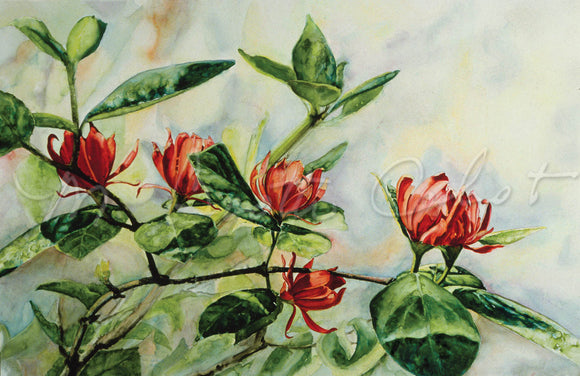 Sweetshrub (Calacanthus) - Watercolor