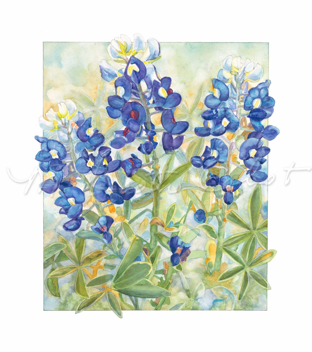 Bluebonnets - 'Texas Bluebonnets' - Watercolor