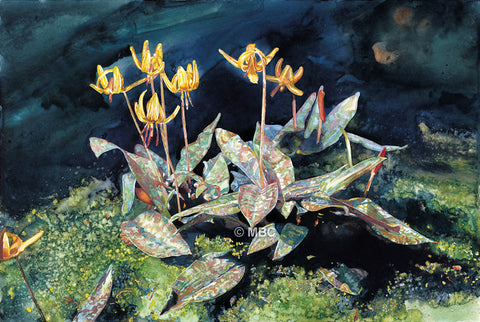 Trout Lilies - Watercolor