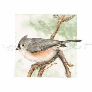 Bird - Tufted Titmouse (Baeolophius bicolor) - Watercolor