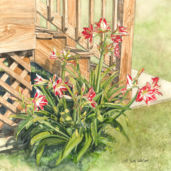 Amaryllis Lilies at the foot of the back stairs