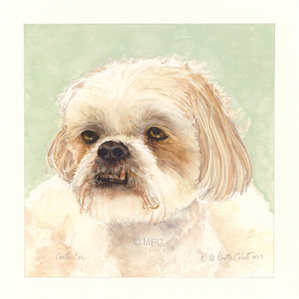 "Shipoo ""Carter Carr"" Portrait - Watercolor Commission"