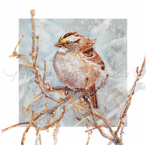 Bird - White-throated Sparrow  - Watercolor