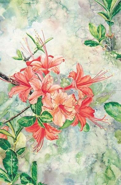 Azalea - Wild Flame Azalea - Watercolor
