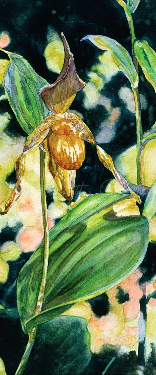 Orchid - Yellow Lady Slipper - Watercolor