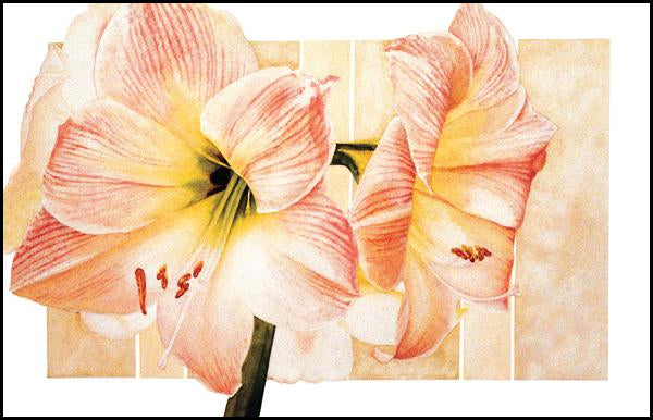 Amaryllis Apple Blossom - Watercolor
