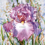 Iris -' Bishop's Cloak' Bearded Iris
