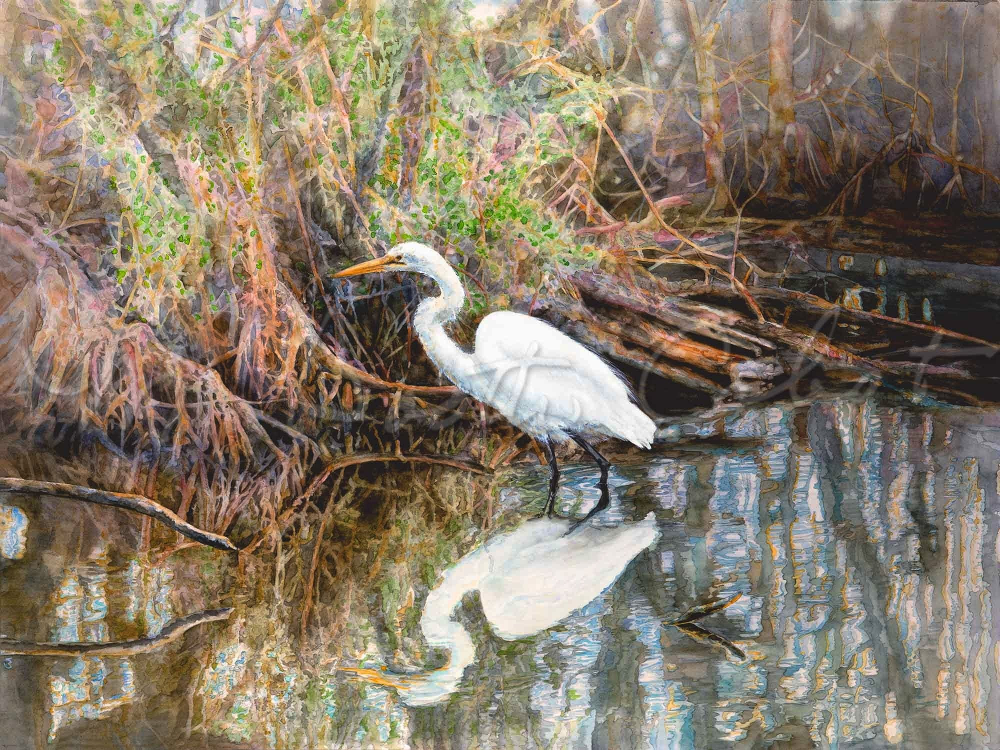 Egret in Mangrove Swamp - Watercolor
