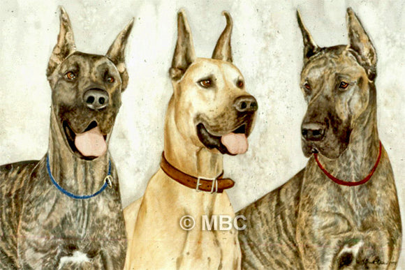 Great Danes - Watercolor commission