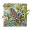 Bird - House Finch on Blackberries - Watercolor