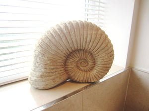 Decorative Ammonite Shell Large 34cm - magnoliavintage