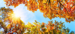 Fall Color Tour & Scenic Drives & Fun Fall Activities in Northern Wisconsin