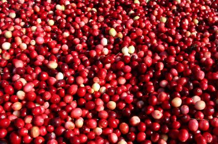 Popular Cranberry Festival in Stone Lake, Wisconsin