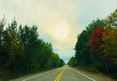 Afternoon sun as the colors change on Hwy 63 in northwestern Wisconsin