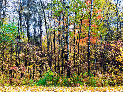 Fall & autumn colors in Hayward WI