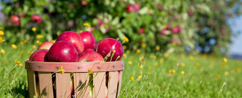 Bayfield Apple Orchards - Bayfield Apple Fest