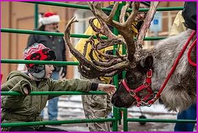 A Lure of Lights - Events with Reindeer, Santa Sightings, parades, lights & more