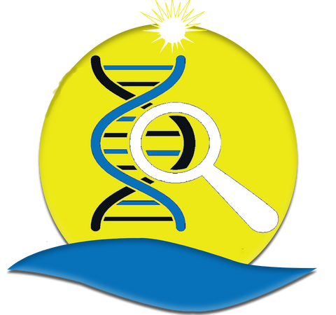 DNA Is affected by sun rays