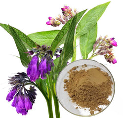 Symphytum Officinale (Comfrey) Extract
