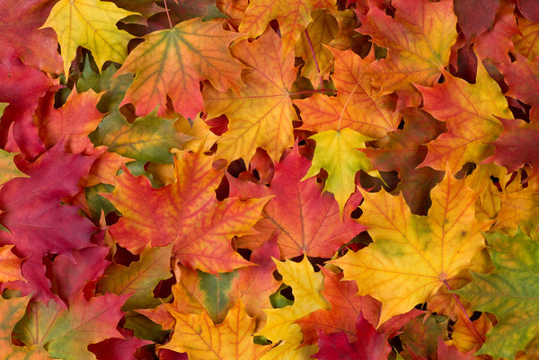 Don't let leaves cause leaks this winter!