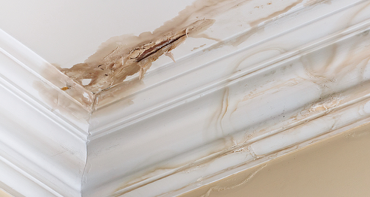 3 Reasons Your Roof Might Be Leaking