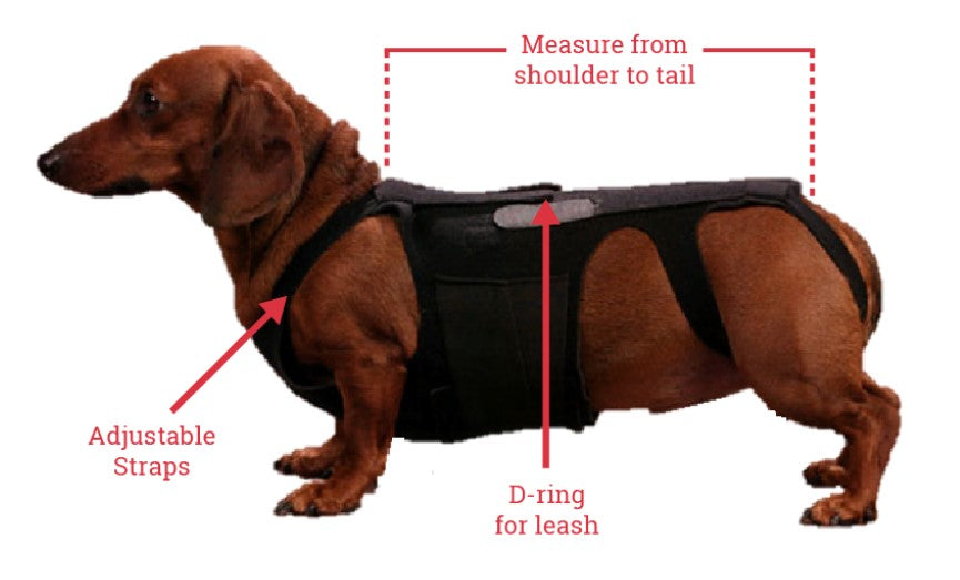 What Size Fits Your Dog?
