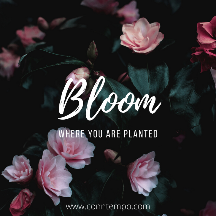 Let's Bloom Together!